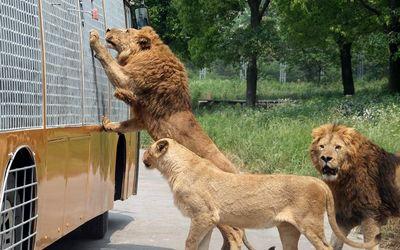 苏州到上海野生动物园一日游